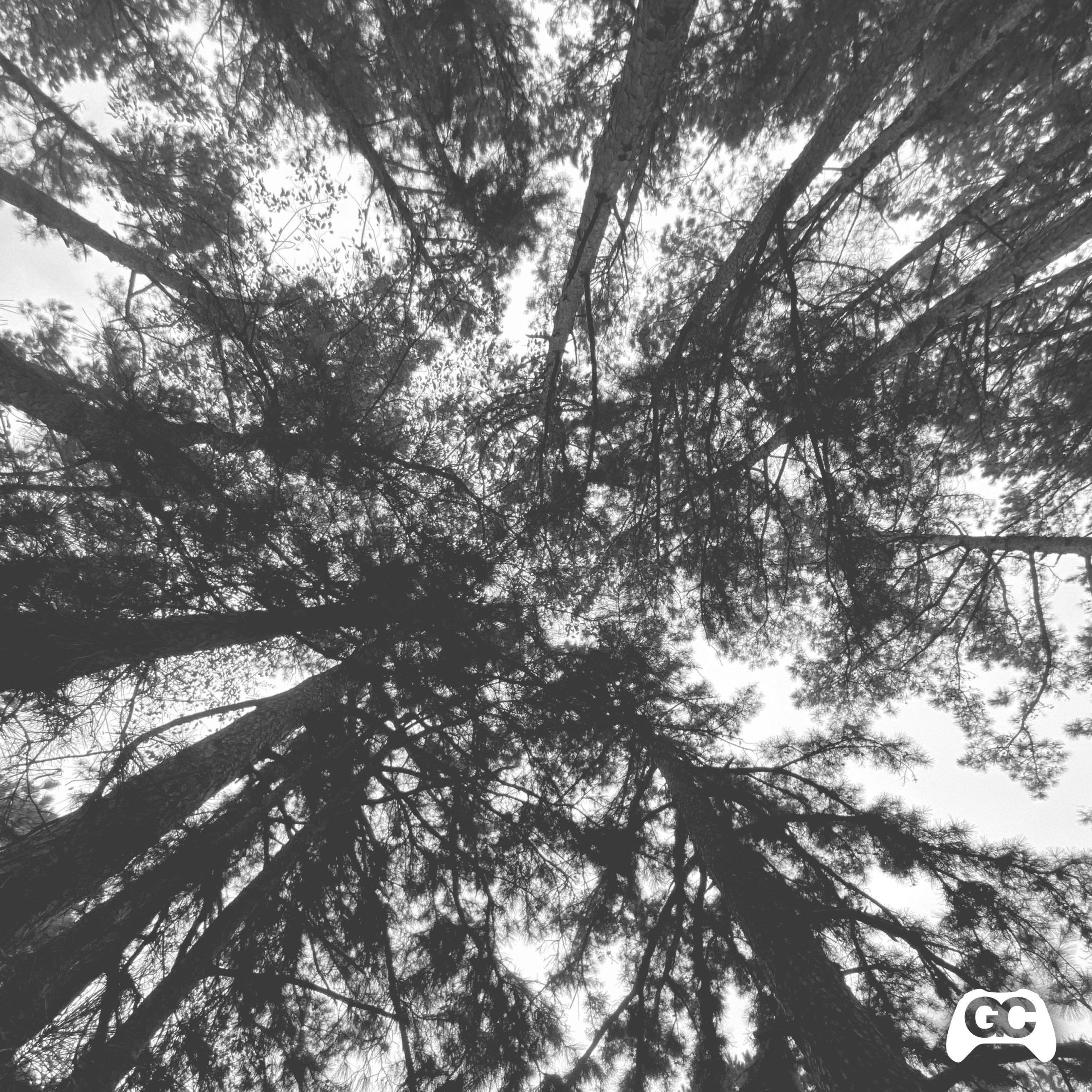 Lost Woods – Koreskape