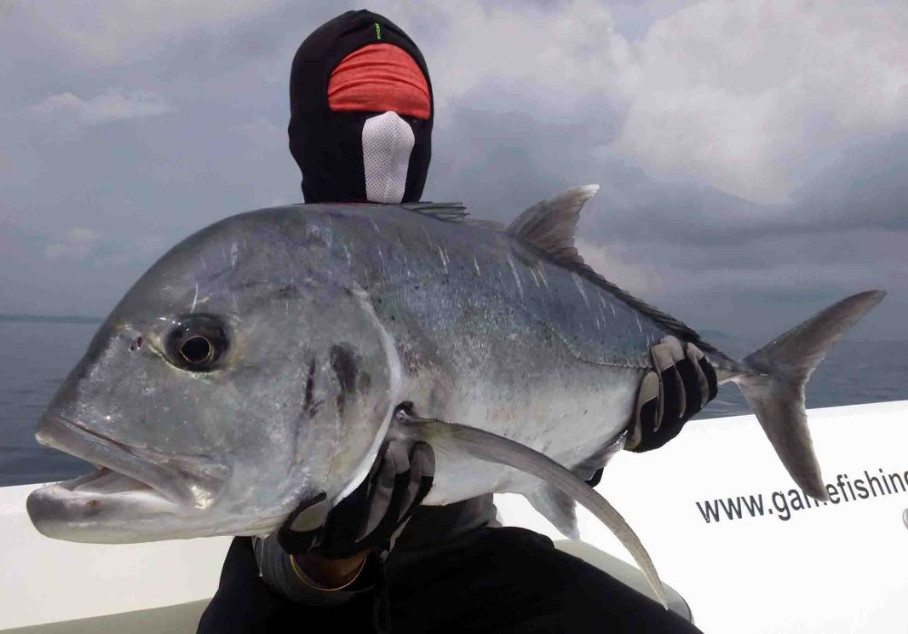 giant-trevally_popping_andaman_race-point-150-rods_shimano-stella-reels_kokari-popper_suresh