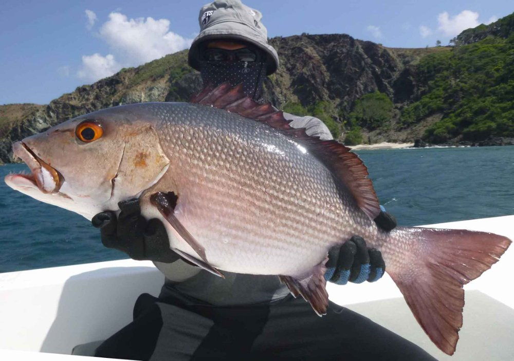red-snapper_popping_andaman_race-point-rods_shimano-saragosa-reels_kokari-popper_suresh_cover-pic