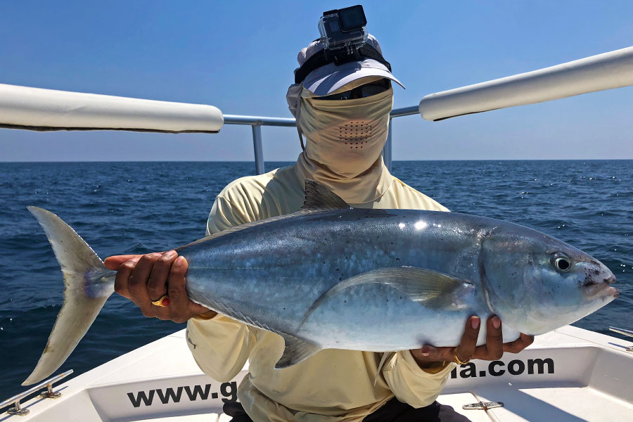 bludger-trevally_popping_andaman_carpenter-85-36-rod_daiwa-saltiga-gt-6000-reel_suresh-4