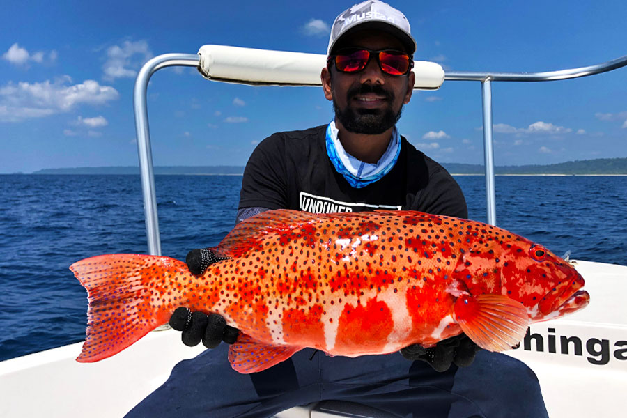 coral-trout_jigging_andaman_carpenter-85-36-rod_daiwa-saltiga-gt-6000-reel_ravi