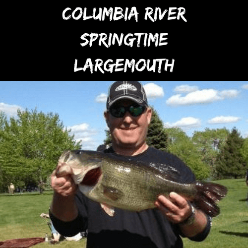 Columbia River Springtime Largemouth