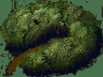 Wpau Jungle Official Pillars Of Eternity Wiki