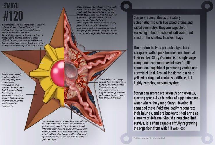 PokéFocus] Guía ilustrada de anatomía Pokémon
