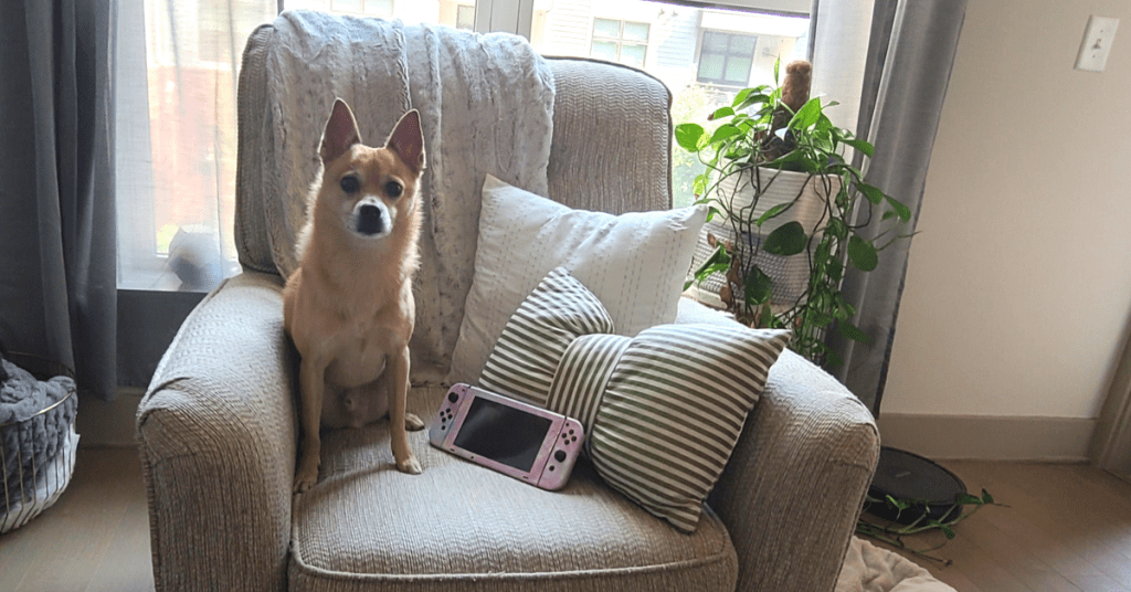 Photo of a chair and 2 pillows with Rory, Glo's dog, sitting next to a pink Nintendo Switch