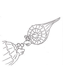 Coloring Pages: Sea Turtles and the Quest to Nest: WaterLife