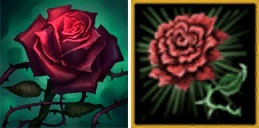 rose difference (1)