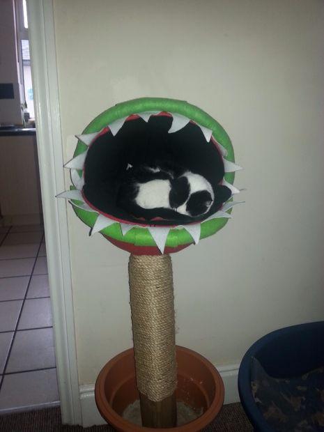 Der Katze gefällt es. (Foto: Instructables)