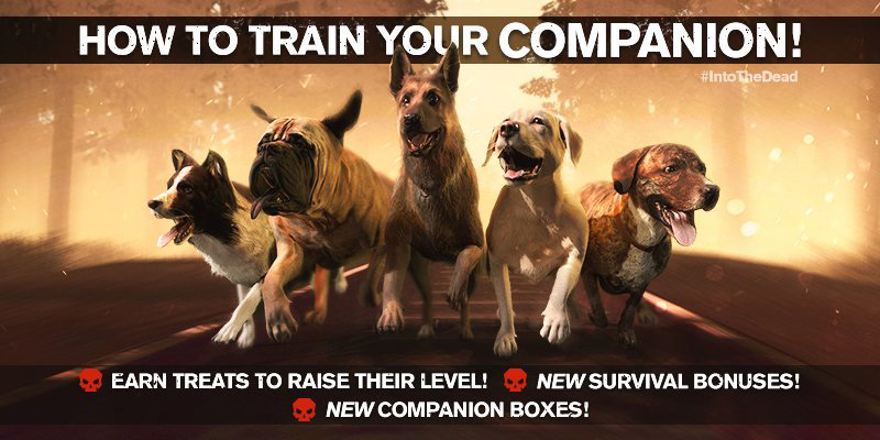 Into the Dead 2 dog companions how to train your companion