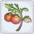 desert tomato