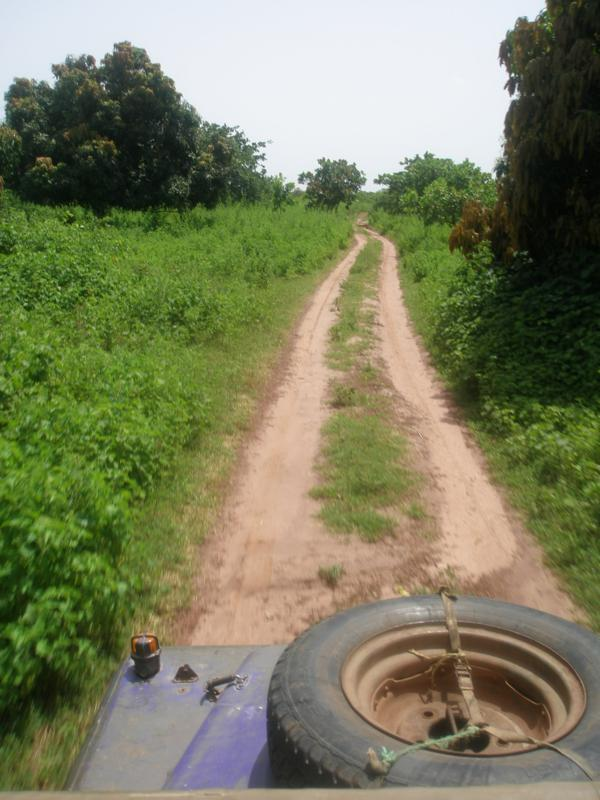 Por la selva gambiana .