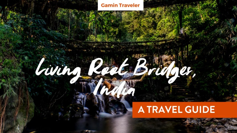Living Root Bridges India - A Travel Guide - Featured