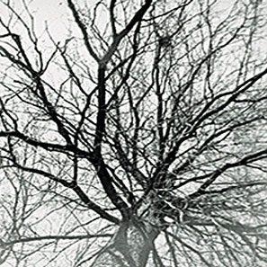 pruning_1