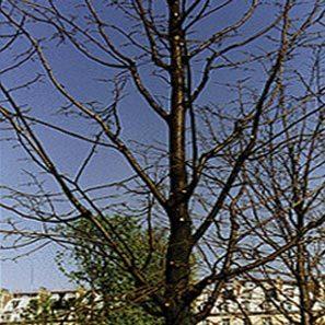 pruning_3