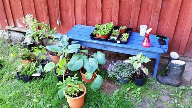 planter_lille