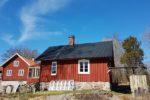 Frilandstomater i Småland