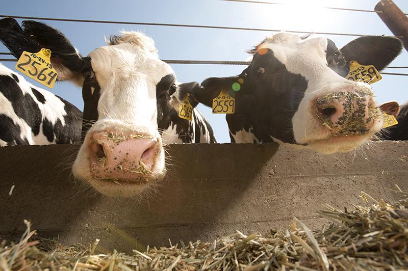 5 pasos para crear heno de calidad para tu ganado