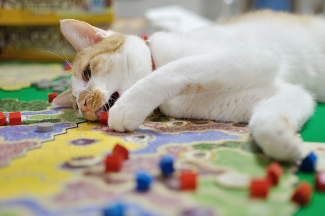 Cat eating boardgame