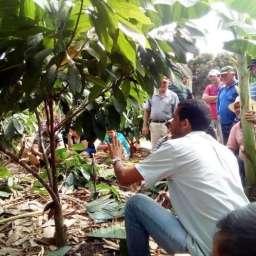 Produtores rurais participaram de seminário sobre Cacau clonal