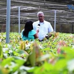 Biofábrica de Cacau produz clones de cacaueiros com alta produtividade e resistentes a doenças