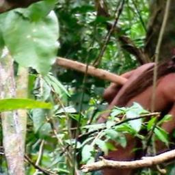 Funai divulga imagens de índio isolado na Amazônia