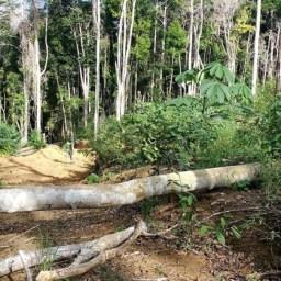 Não haverá mais dinheiro para ONGs escusas, diz ruralista do governo Bolsonaro