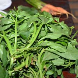 Bahia desponta como referência em segurança alimentar e nutricional