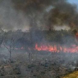 Governo quer R$ 1 bilhão de fundo da Petrobras para combater queimadas