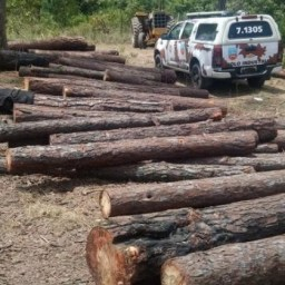 Desmatamento está entre principais causas de surtos de doenças infecciosas, diz estudo
