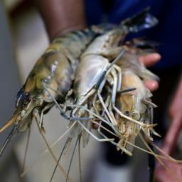 Pesquisadores da Ufba contestam governo sobre consumo de pescados