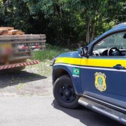 PRF apreende carga de madeira ilegal no município de Gandu