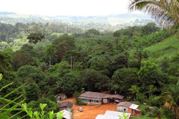 Produ%C3%A7%C3%A3o-agroflorestal-de-cacau-rende-mais-que-gado-na-Amaz%C3%B4nia-2 Produção agroflorestal de cacau rende mais que gado na Amazônia