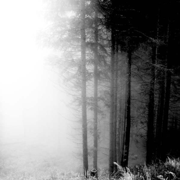 forêt des violons italie