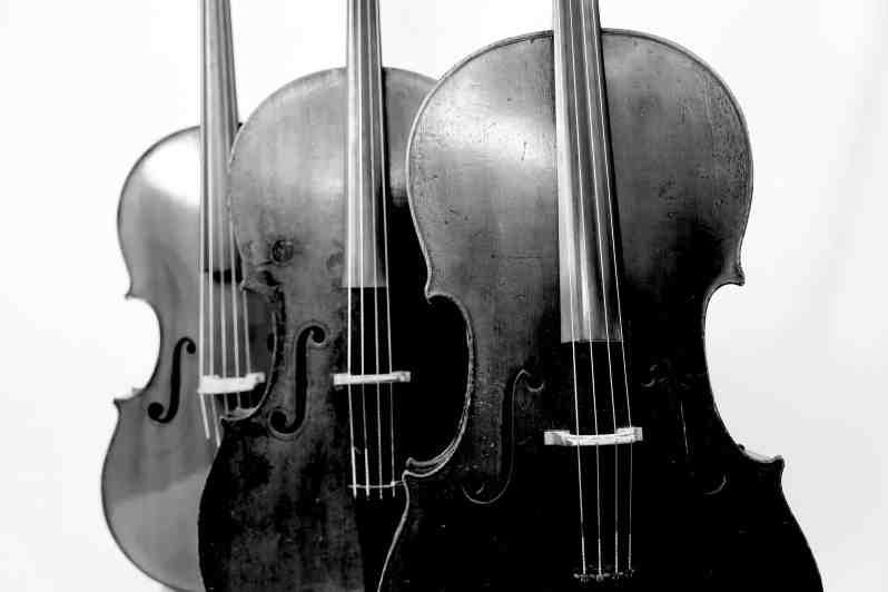 Forêt de violoncelles