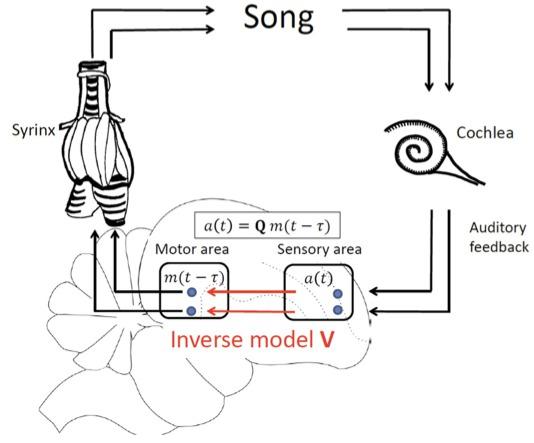 Principles Of Neural Science Pdf Torrent