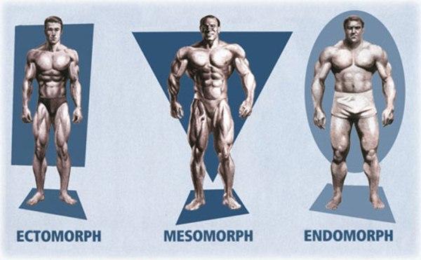 tipos-de-biotipos
