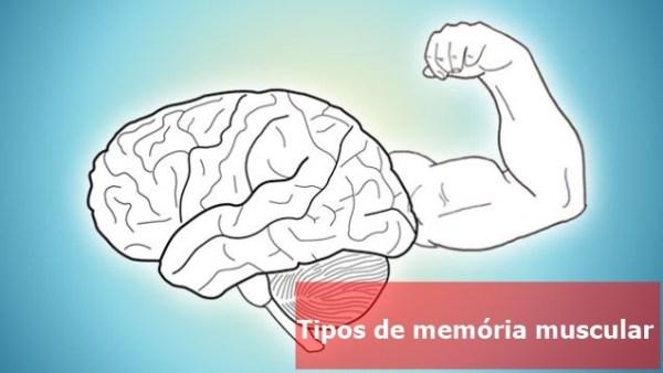 Memória-Muscular-tipos