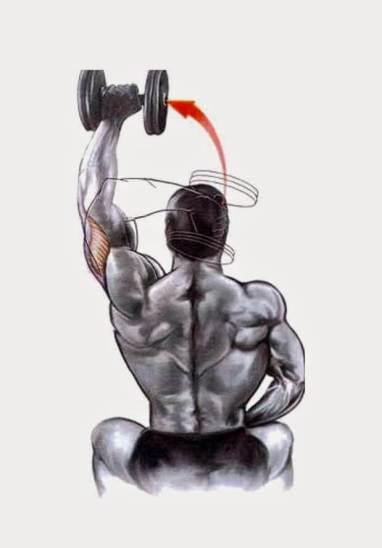 Treino abcde Extensão de tríceps francês unilateral com halteres em pé ou sentado