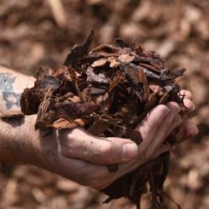 Pine Bark Mulches