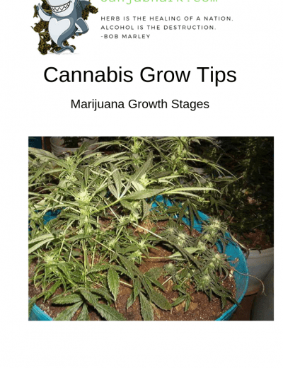 Cannabis Grow Tips