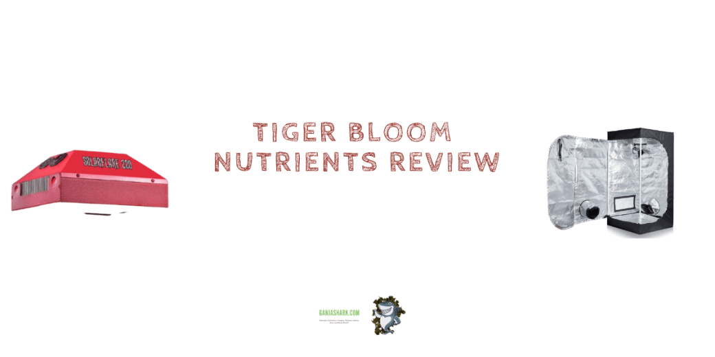 Farm Tiger Bloom Review
