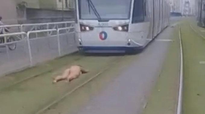 電車で自殺しようとしている女性・・・裸なのはなぜだ??