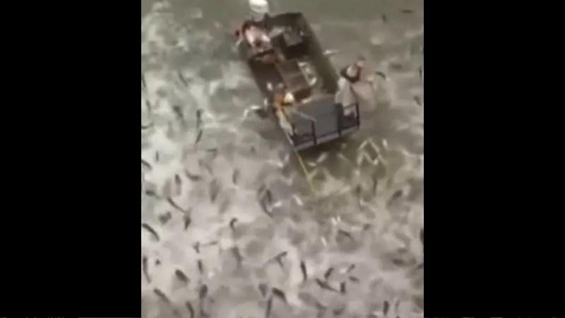 何この漁法? 魚とり放題の最高の漁法がコチラ!