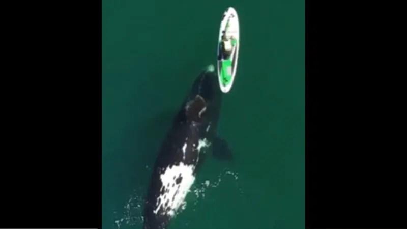 クジラは遊んでいるだけだろうがボートに人は恐怖しか感じなかっただろうね。
