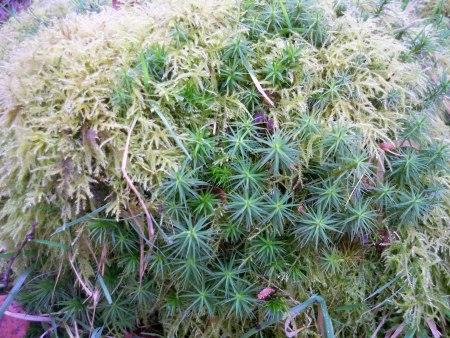 Bloomin Padley Gorge
