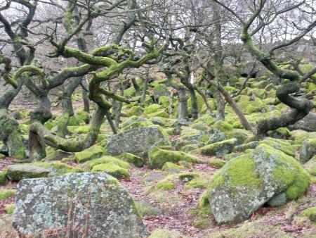 Padley Gorge mossy rocks