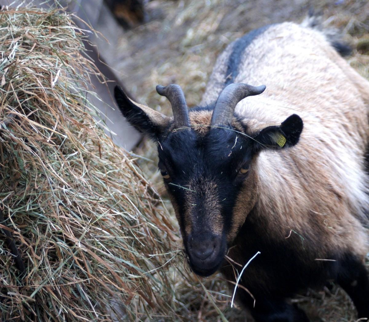 Tiere füttern Urlaub im Landhaus Averbeck
