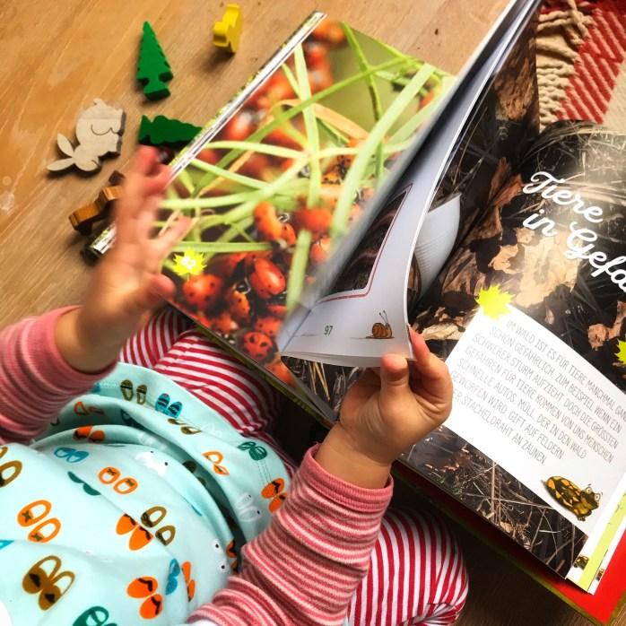 Buchtipp für Kinder - Kinderbuch über Tiere im wald von Peter wohlleben - Kinderbuch