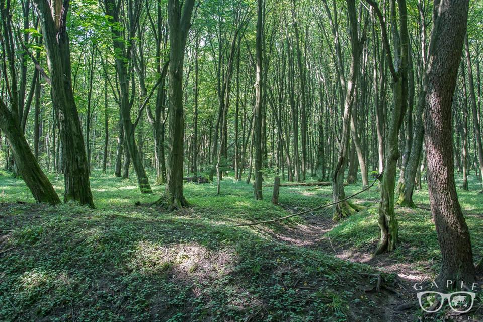 las zwierzyniecki