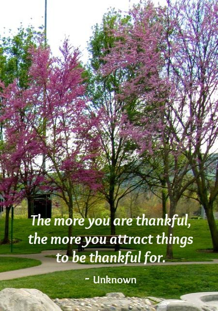 Quote - The more you are thankful, the more you attract things to be thankful for.